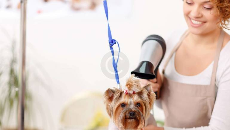 Foods to Avoid Feeding your Pet